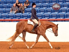 2015 APHA World Show Right Trot